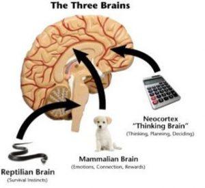 تفکیک مغز در بازاریابی عصبی